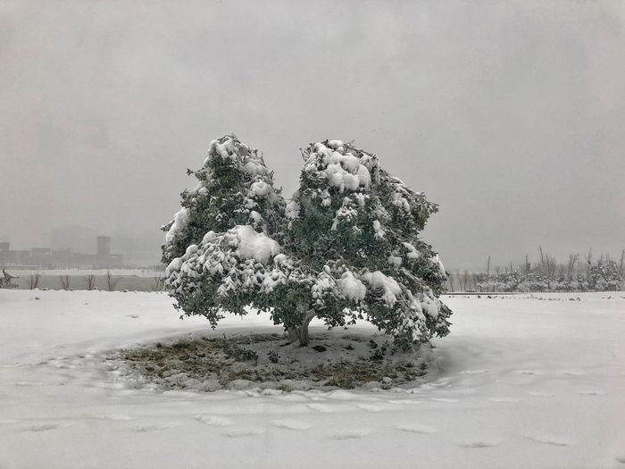 Tree on snow covered field against sky