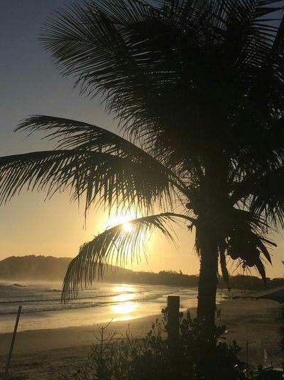 Sunset Sea Palm