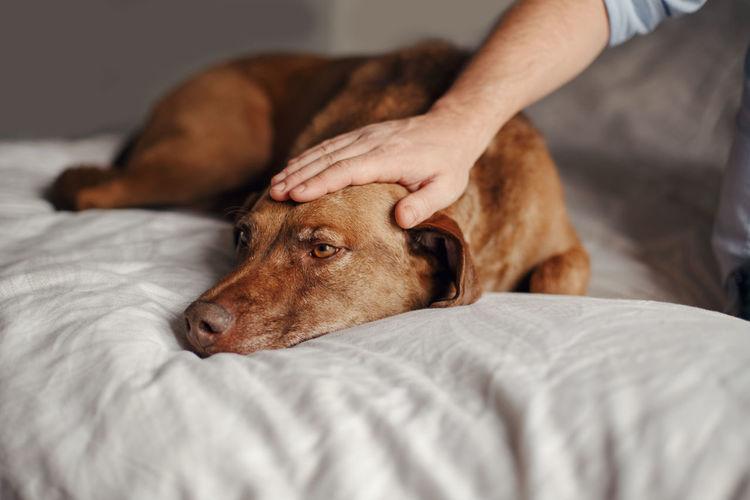 Closeup of master owner hand palm petting stroking a dog. sad animal
