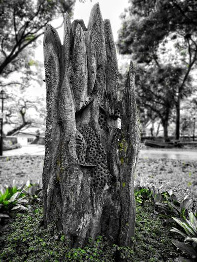 Sculpture, fort canning park, Singapore Grren Monochrome Sculpture Nature Sculpture Nature