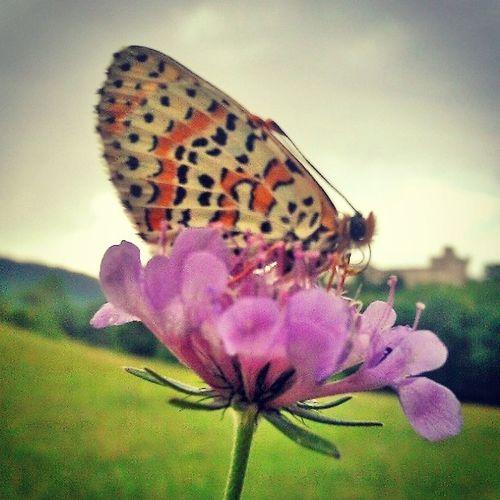 Beauté Nature Pâturages Fleurs papillon photographique love