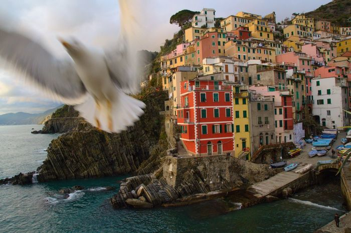 Photobombed by a seagull 😂 Seaside Cinqueterre Italianriviera Water Architecture Built Structure Nature Building City