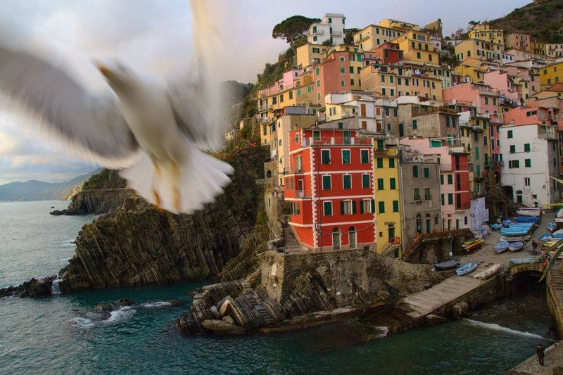 Blurred motion of seagull flying over sea against buildings