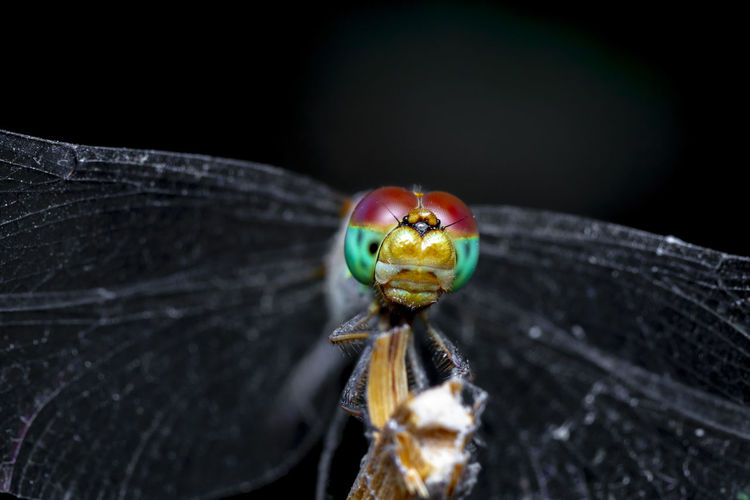 Macro photo of the colorful face of the dragonfly