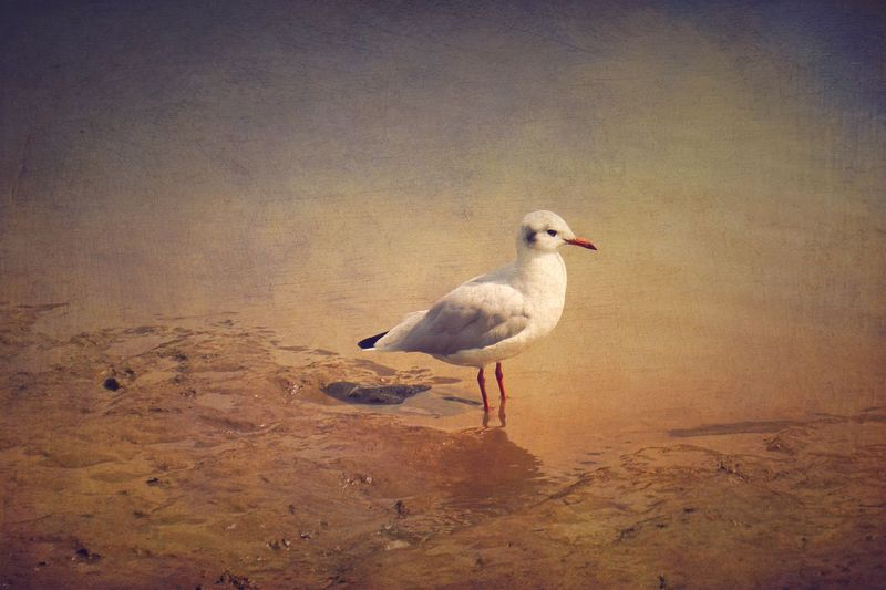 Bird Animal Themes Animals In The Wild One Animal Nature Animal Wildlife No People Outdoors Day Beauty In Nature Perching