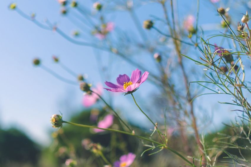 Flower Plant Multi Colored Pink Color Nature Fragility Butterfly - Insect Close-up Springtime Leaf Beauty In Nature No People Insect Outdoors Freshness Biology Day Sky Flower Head