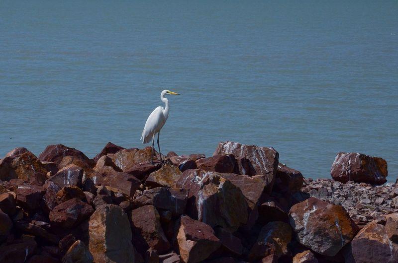 Hungary Balaton Lake Animals In The Wild Animal Wildlife Bird No PeopleDay Nature Outdoors Water