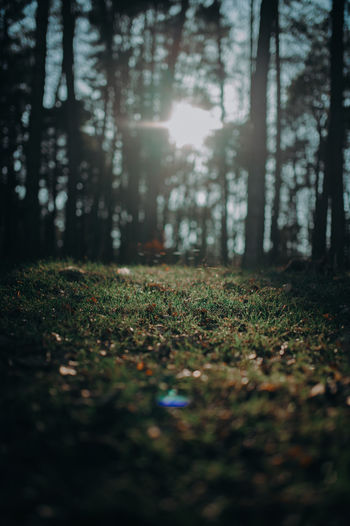 Sunlight falling on leaves in forest