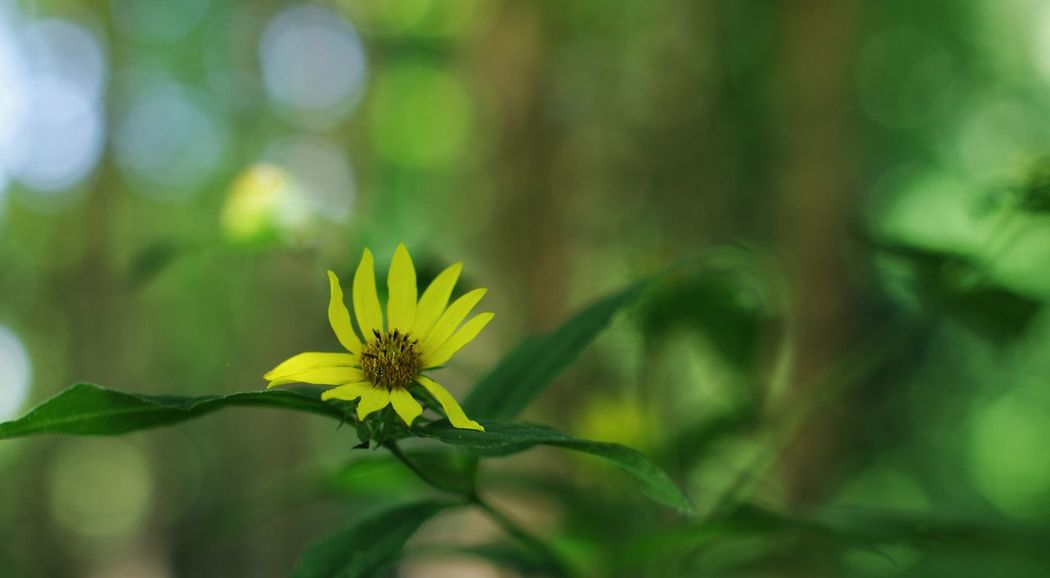 Just the way it is. 50 1.4 Focus On Subject Blurred Background Depth Of Field Natural Bokeh Flower Fragility Plant Nature Petal Leaf Flower Head Freshness Beauty In Nature Outdoors Day Green Color Close-up Yellow Growth Beauty Photography