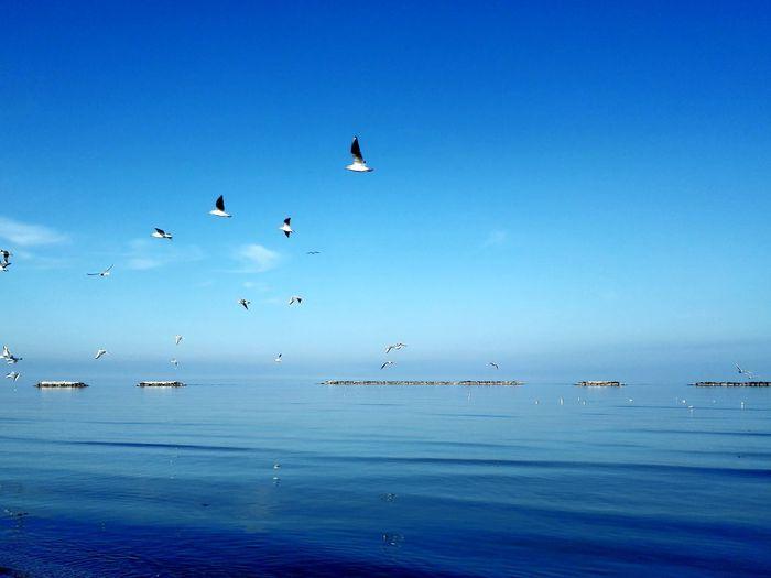 Huaweiphotography MadeinItaly Bird Flying Water Blue Beauty Flock Of Birds Sea Sky