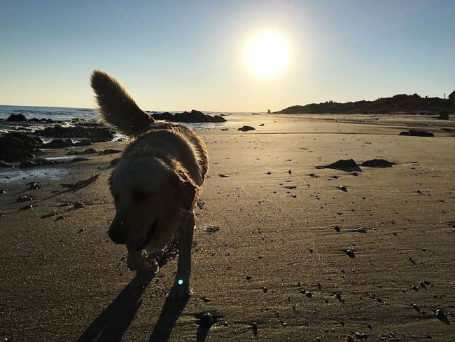 Enjoying Life Nature Photography Lights And Shadows Landscapes Uruguaynatural Sand & Sea Playa Sea And Sky Golden Retriever Dogslife Dogs Sunset