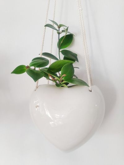 High angle view of potted plant on white background