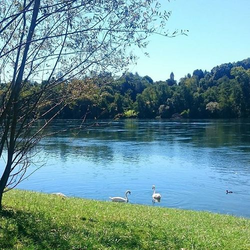 LUNCH TIME. Sesto Calende, VA. 1.05 pm Lunch Lunchtime Lake Varese Duck Havealunch Goodlunch Enjoying Sun Trees