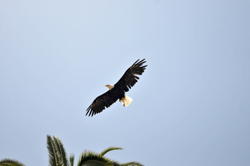 Flying Animals
