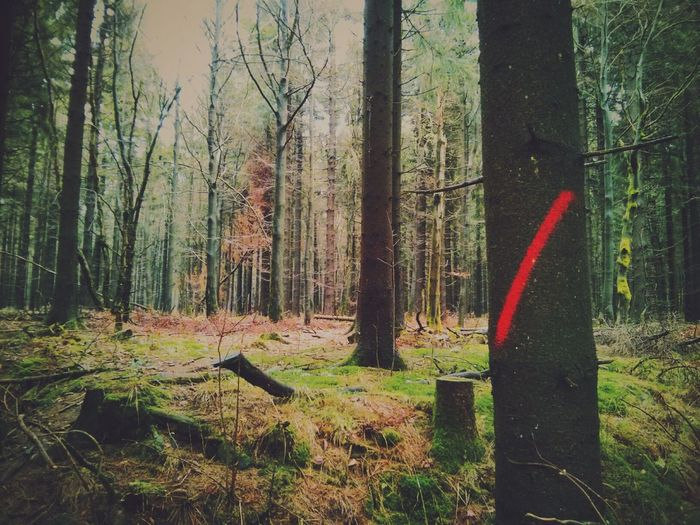 don't cross the Woods. Red Signs