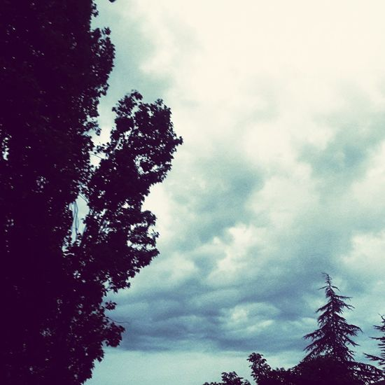 Cloudy Sky Cloudy Day!! Rain☔ Nice Weather Trees And Sky Luckyday