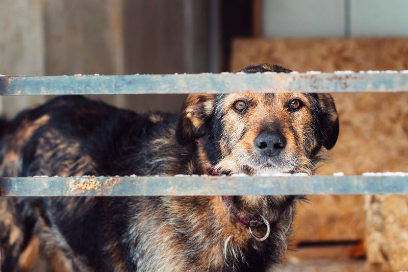 Dog Seen Through Metal Rods