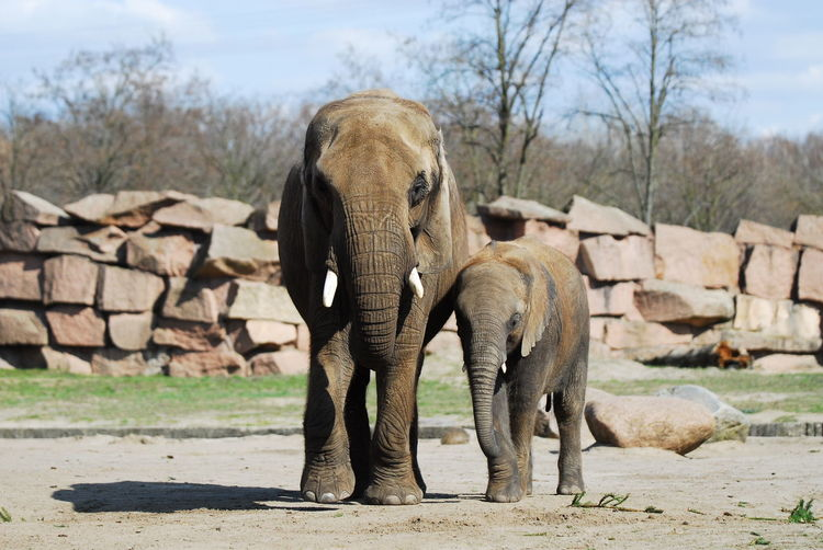 Animal Beauty In Nature Day Elephant Herbivorous Landscape Mammal Nature No People Non-urban Scene Outdoors Sky Togetherness Tranquility Tree