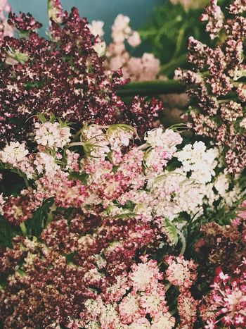 Flower Blossom Fragility Growth Beauty In Nature Nature Freshness Springtime Botany Pink Color No People Tree Branch Petal Day Outdoors Lilac Close-up Blooming Flower Head Bouquet Of Flowers Flower Bouquet  Wildflowers Carrot Flowers Beauty In Nature