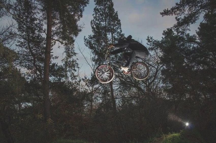 The Color Of Sport Sport Sports Photography Extreme Sports Bmxlife OurLifeStyle Workingwithlights Light And Shadow Low Angle View Trees Outdoors Leisure Activity Canonphotography Madeby FlexoGrafie