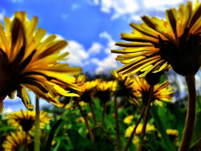 Flowers Nature EyeEm Nature Lover 虫メセン