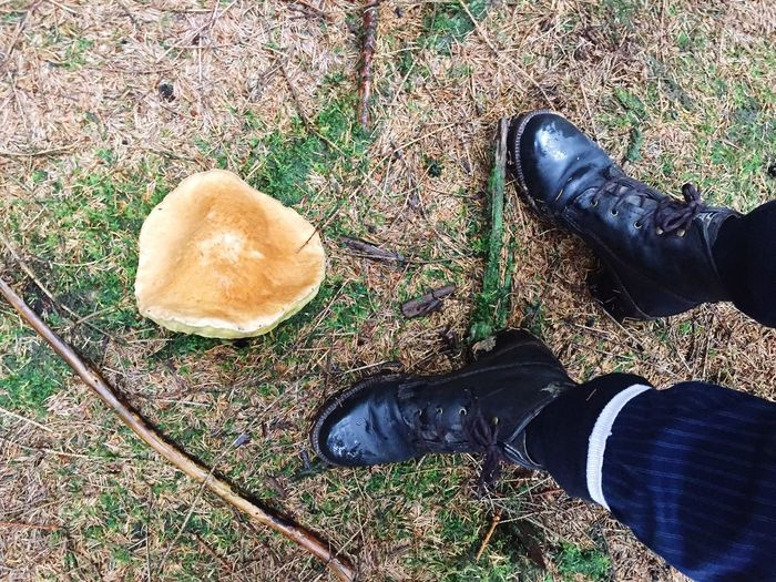 Collect Mushrooms Boots In The Forest In The Woods Mushroom Fungus 🍄 Autumn Autumn Collection Top Perspective Outdoor Activity Autumn Is Coming