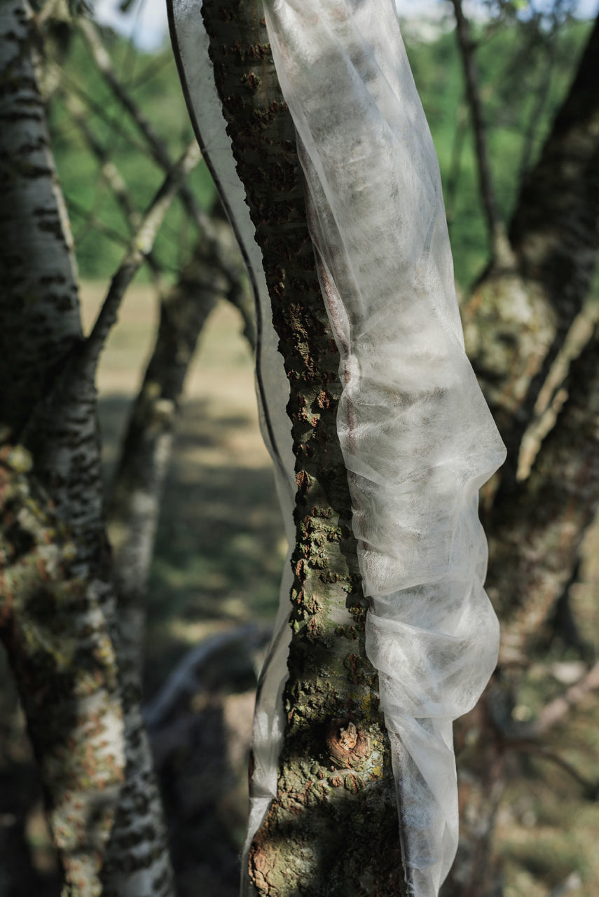 CLOSE-UP OF TREE TRUNK IN THE FOREST