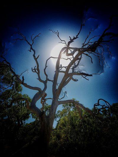 Night Tree Branch Nature No People Night Silhouette Sky Outdoors Low Angle View Beauty In Nature Day Melbourne Sunshine Backlight Tree Trees And Sky Treesilhouette Treelovers