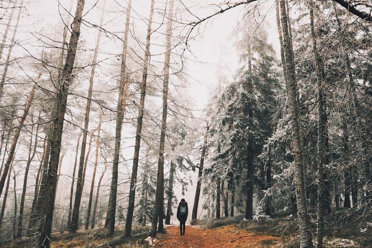 RePicture Travel Nature Nature_collection EyeEm Nature Lover Naturelovers Forest Trees Snow