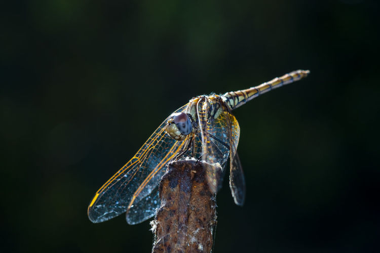 Close-up photo of a dragonfly resting in the shade