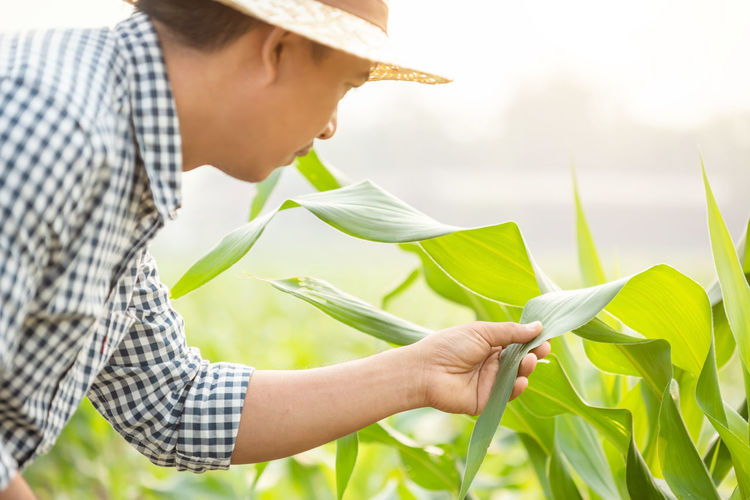 Midsection of man holding plant in field