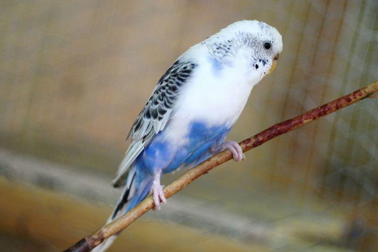 Bird Popugai Bird Photography Parrot Beautiful White Blue Taking Photos