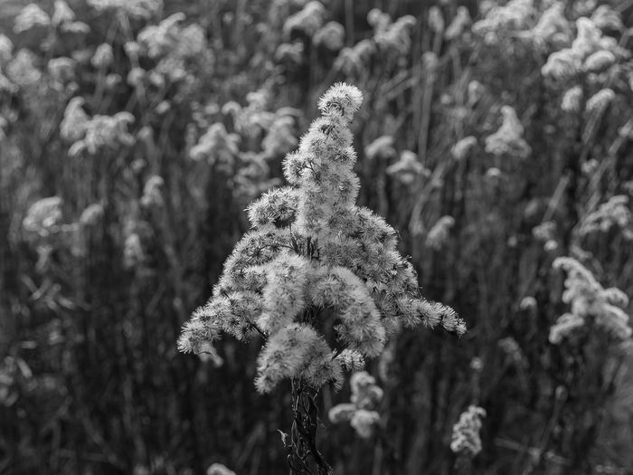 Close-up of flowering plant on snow covered land