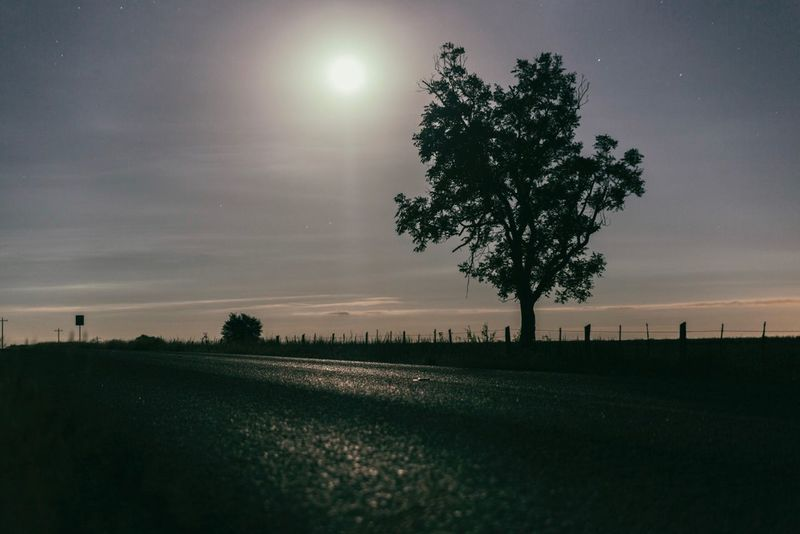 You say you go away, yeah, still hit my line though. Tree Beauty In Nature Sun Sky Landscape Tranquil Scene Nature Tranquility Sunset Scenics Field Outdoors No People Grass Day