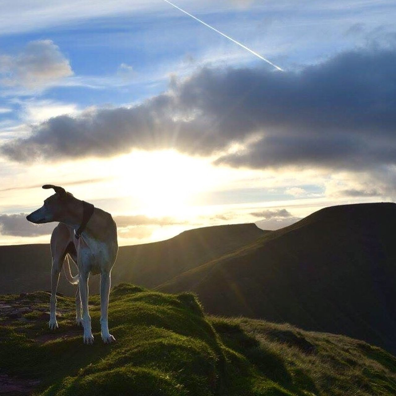 one animal, animal themes, domestic animals, mammal, landscape, nature, cloud - sky, sunset, sky, outdoors, dog, scenics, no people, standing, day, beauty in nature, pets, mountain, grass, vapor trail