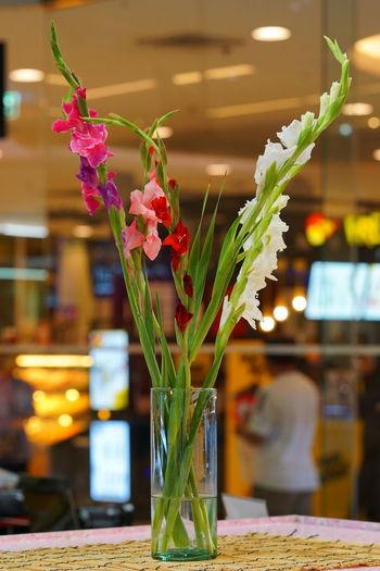 Sony Lens Flowers