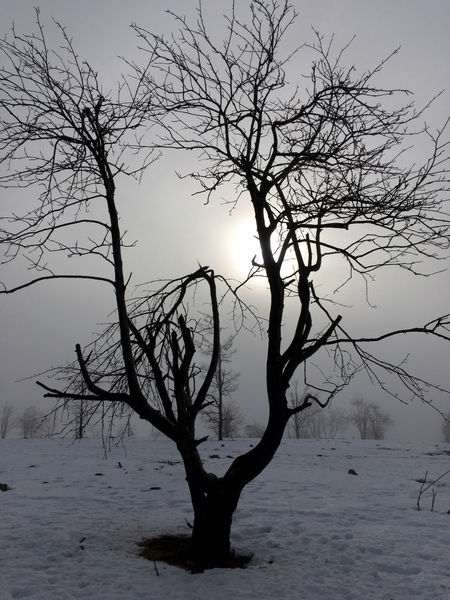 Foggy winter morning First Snow Melancholic Landscapes Winter Wintertime Bare Tree Beauty In Nature Branch Cold Temperature Day Dead Tree Erster Schnee Landscape Lone Melancholy Nature No People Outdoors Scenics Sky Snow Tranquil Scene Tranquility Tree Tree Trunk Water Winter Winter Trees Winterberg