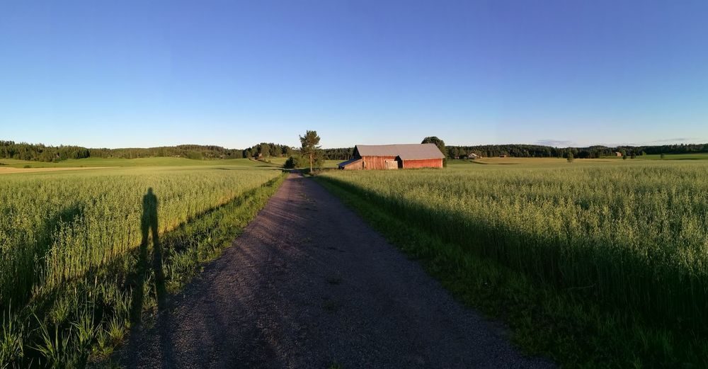 Finland Countryside Landscape Oatfields Old Barn Long Road Peacefull Evening Finland Summer Calm View First Eyeem Photo Cloudless Sky Shadow Silhouette Bluesky