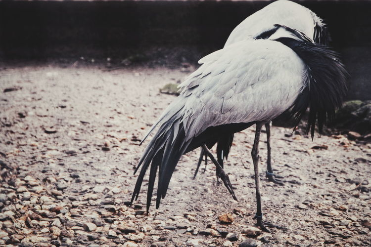 Animal Winter Bird Crane - Bird Pelican Ibis Analogue Sound