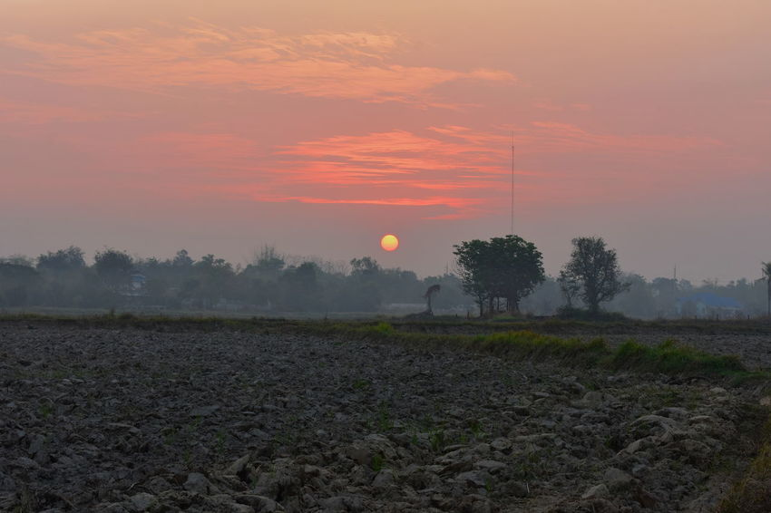Field Golden Morning Paddy Rice Agriculture Beauty In Nature Day Field Golden Clouds Growth Landscape Nature No People Outdoors Ploughed Ploughed Field Rice Field Rural Scene Scenics Sky Sunrise Sunset Tranquil Scene Tranquility Tree