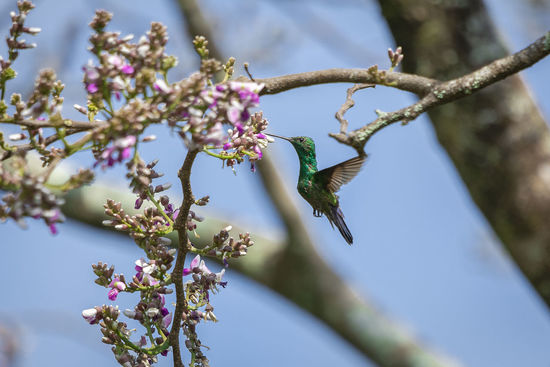 Colibri Animal Animal Themes Beauty In Nature Bird Day Flower Flowering Plant Fragility No People One Animal Plant Tree