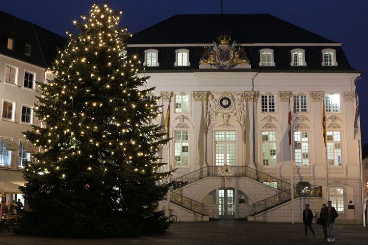 Christmas Tree in Bonn Bonn City Tree Illuminated Christmas Decoration Politics And Government Christmas Christmas Lights christmas tree Celebration Architecture Tradition