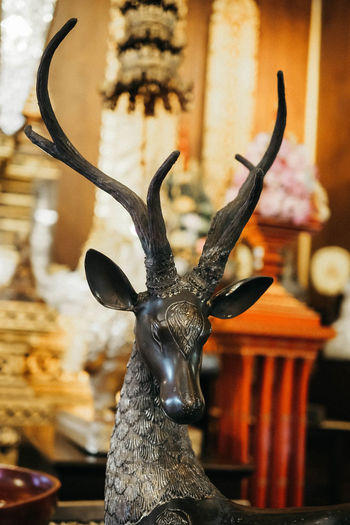 Dear statue Deer Animal Wildlife Focus On Foreground Representation Sculpture Art And Craft Statue Close-up Animal Themes Horned Animal Representation Animal Body Part Decoration Animal Head