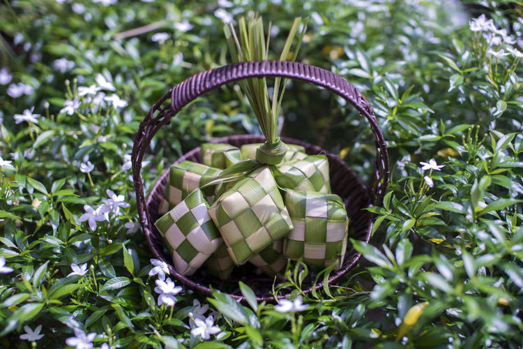 Ketupat or rice dumpling in the bamboo basket. Made of rice wrapped in coconut leaves before boiling until cooked. Regular meals, especially among the Malay community. Eid fitr Concept Asian  Bamboo Basket Celebration Culture Dumpling Rice Eid Al Fitr Eid Mubarak Food And Drink Green Color Hari Lebaran Hari Raya Aidilfitri Islam Islamic Ketupat Ketupat Lebaran Malaysia Malaysia Festive Season Muslim Nature Oriental Outdoors Ready To Eat Tradition Traditional Wooden