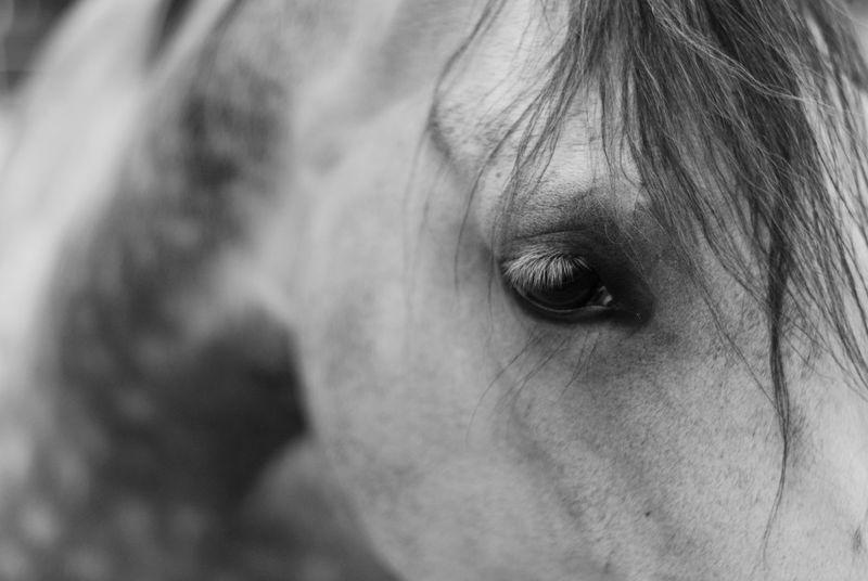 Animals B&w Black&white Close-up Eye EyeEm Nature Lover Fine Art Photography Focus On Foreground Hello World Horse Portrait