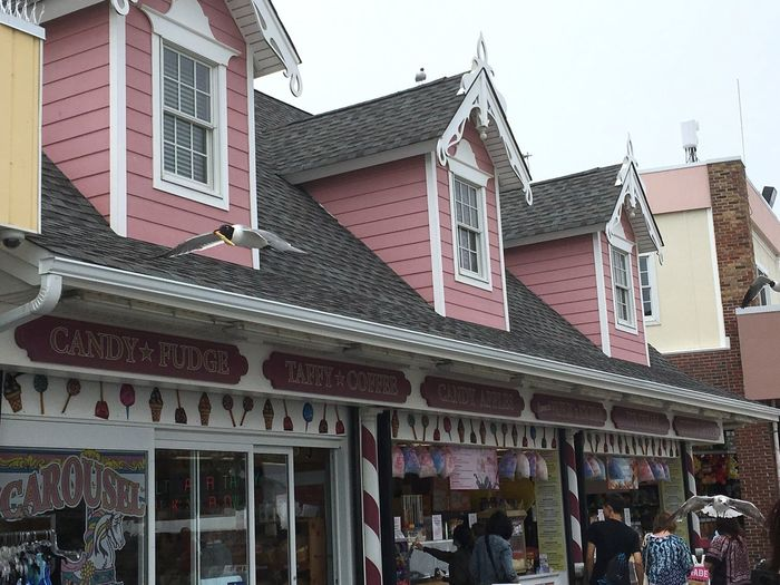 Architecture Building Exterior Building Boardwalk City Day Outdoors Sky Store City Life Town Exterior Multi Colored Seagull Pink Pastel