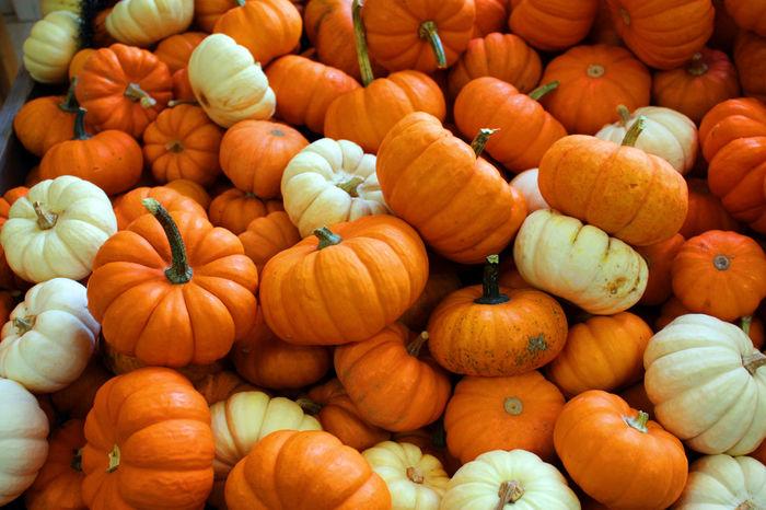 Autumn Gourds Pumpkins