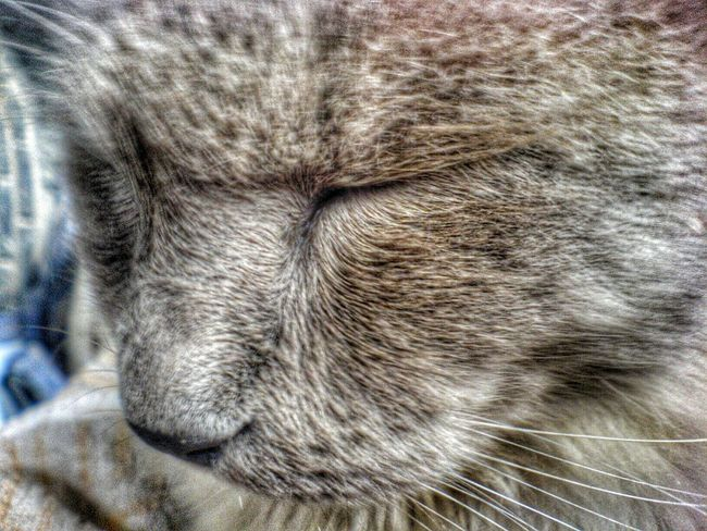 My cat... Cat Animal Photography HDR Collection EyeEm Best Edits