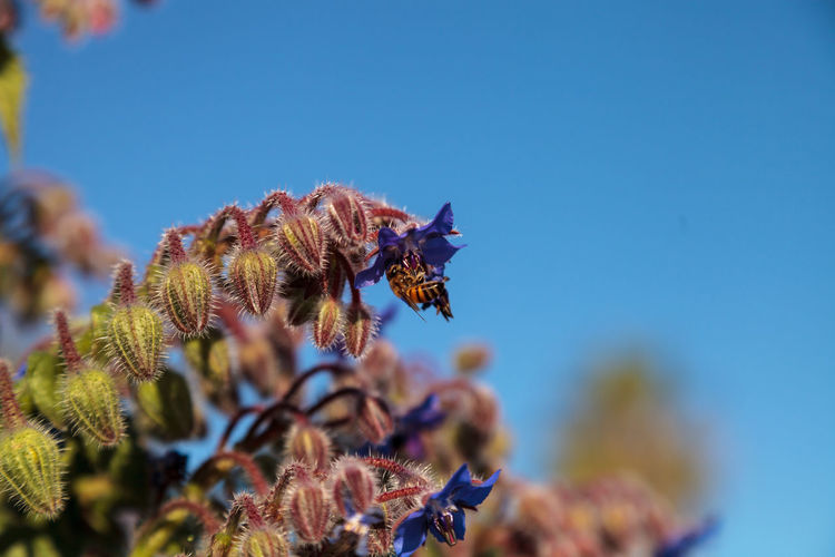 Bees pollinating on flower