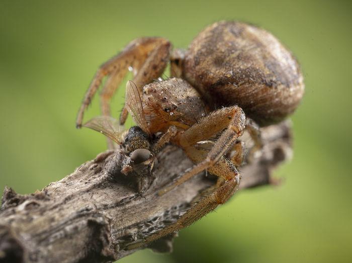 Close-up of spider on tree